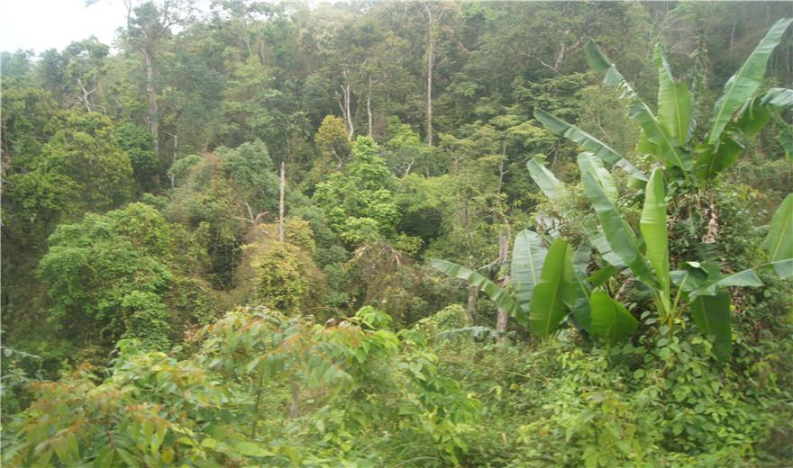 五指山热带雨林