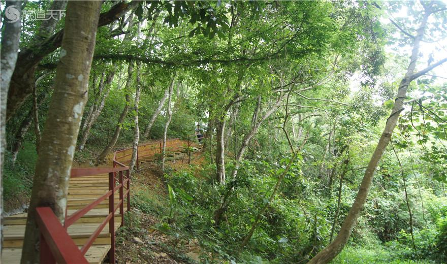 五指山雨林栈道