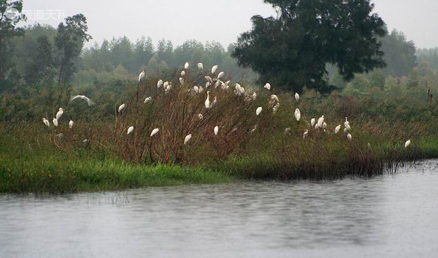 海尾湿地公园芦苇与候鸟